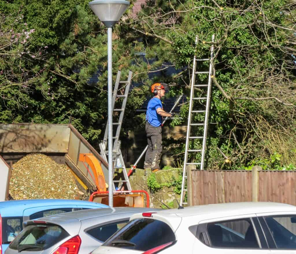 Commercial Tree Services Sutton Coldfield