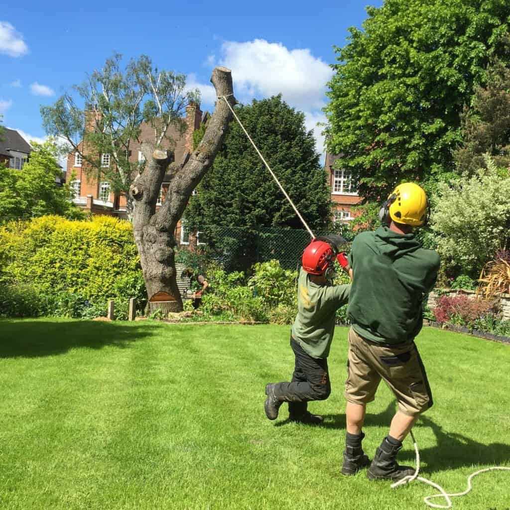 Tree removal Sutton Coldfield